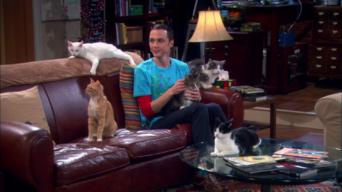 The Big Bang Theory: Season 4: The Zazzy Substitution
