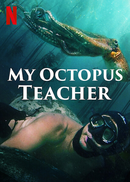 My Octopus Teacher on Netflix UK