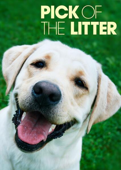 Pick of the Litter sur Netflix UK